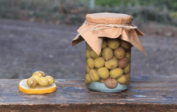 Zeytin Çeşitleri | Çakır Yeşil Zeytin  | Zeytinyağının Faydaları | Zeytin Bahçeleri