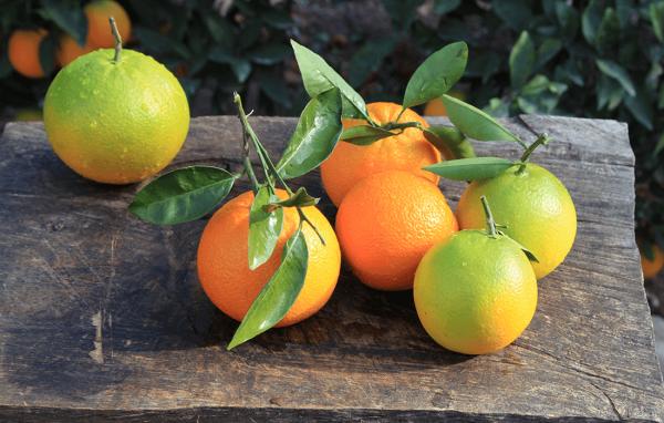 Online Meyve Siparişi | Taze Portakal  | Portakal Bahçeleri | Likya Bağları